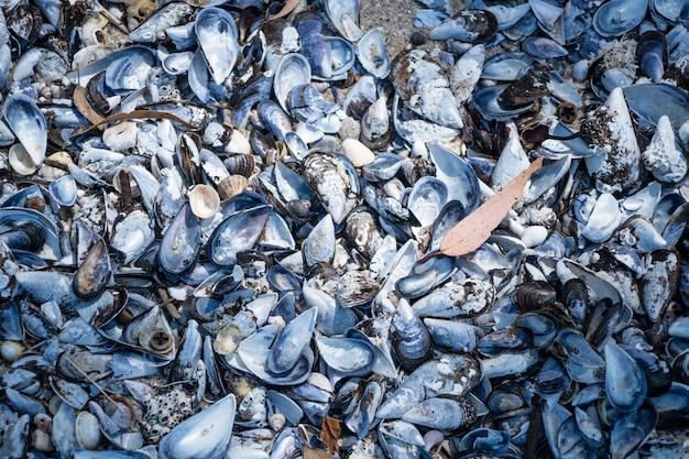 ムール貝の殻の背景。ビーチで空のムール貝の殻