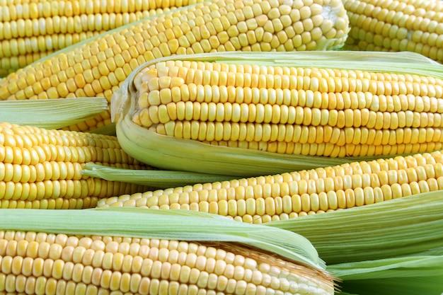 Крупный план натуральных желтых початков кукурузы