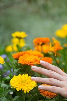 Рука женщины касаясь некоторым цветкам в поле.