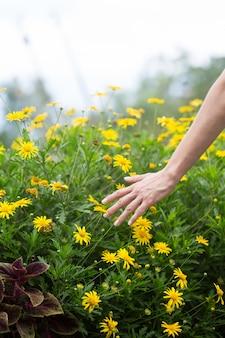 フィールドのいくつかの花に触れる女性の手。