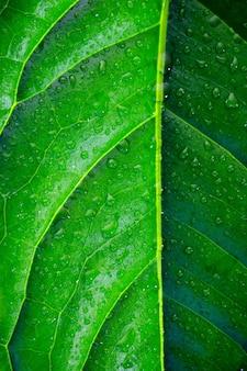 大きな緑の葉と水滴のクローズアップ