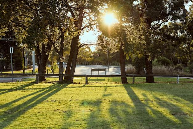 午後の日差しがある平和な都市公園。