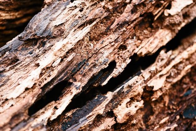 古い腐った木のクローズアップ。