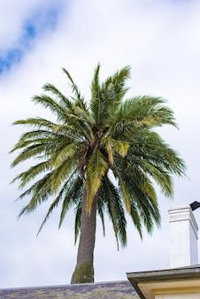 Пальмы частичные