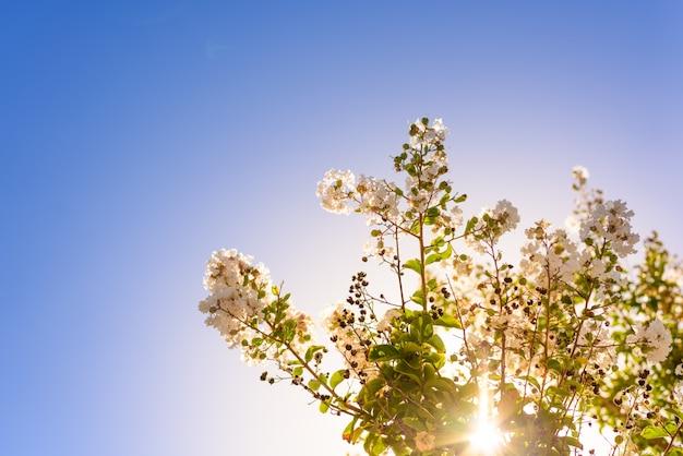 青い空の背景に、朝のバックライトで美しい野生の花。