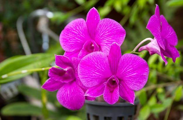 紫の胡蝶蘭の花