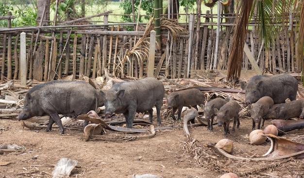 Семья дикого кабана на сельской ферме