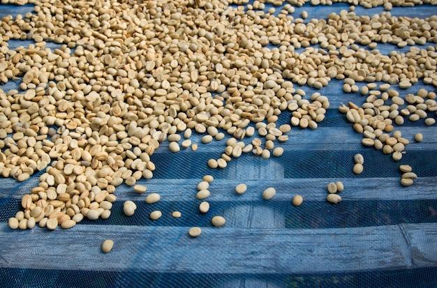 乾燥したコーヒー豆