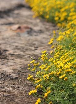 庭の水草トリロバタ