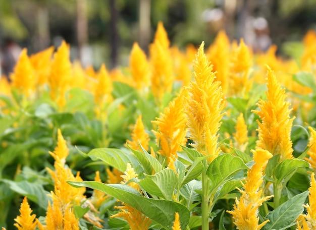 庭のカツオの花