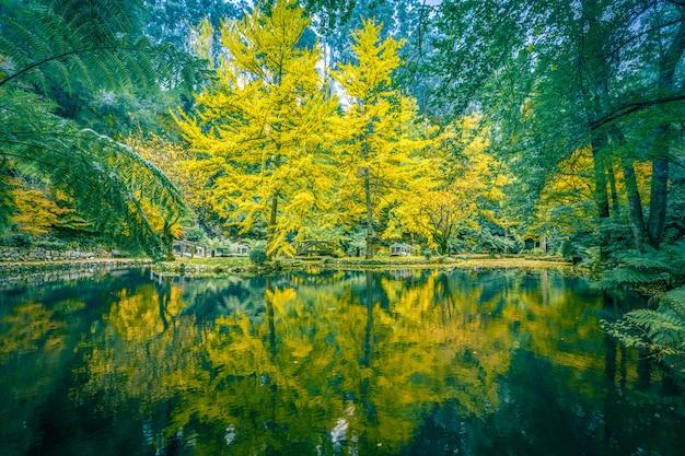 秋の池と木の静かな環境
