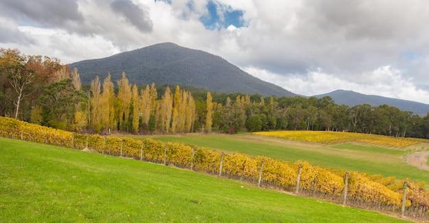 秋のオーストラリア、ヤラバレーのブドウ畑の風景
