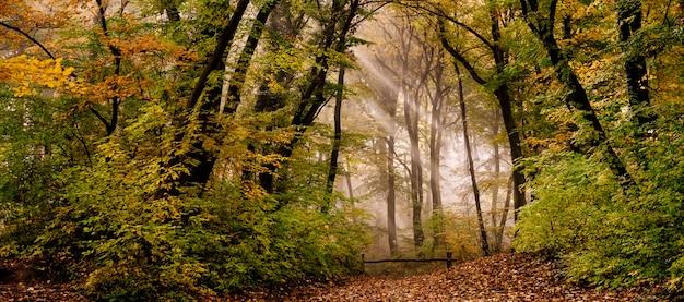 森の朝の霧