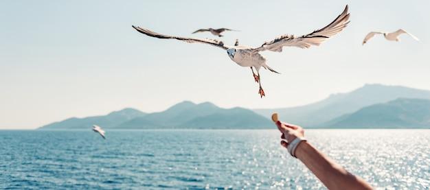 フェリーで旅行し、カモメを餌の女性