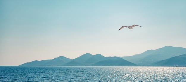 海の上を飛ぶカモメ