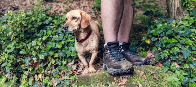 犬と岩の上に立っている彼の所有者