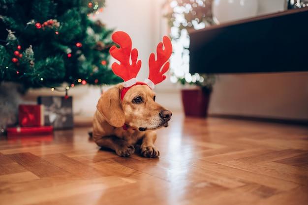 Собака с рогами сидит на полу