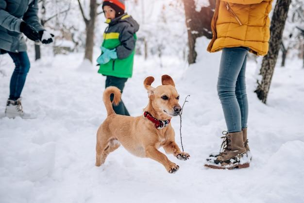 Собака играет на снегу