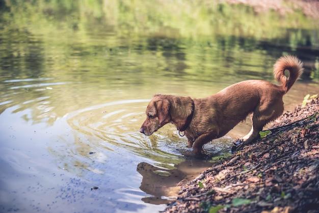 湖で濡れた犬
