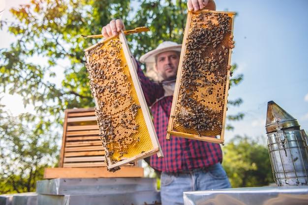 養蜂家が蜂の巣フレームを保持
