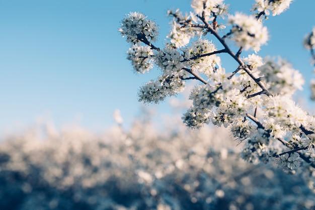 咲く春の木の花