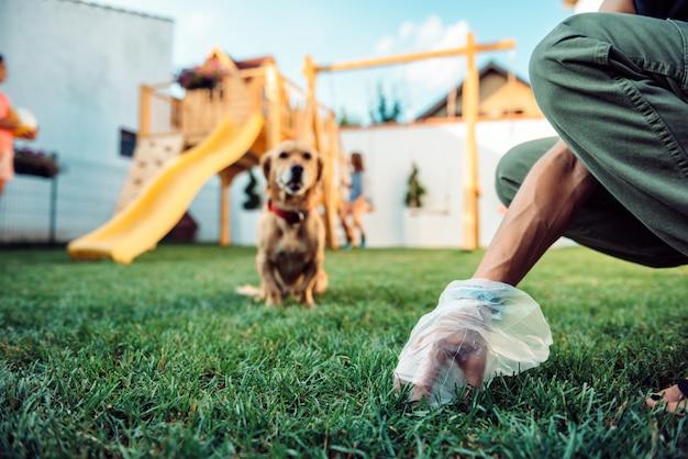 芝生から犬の糞を拾う女性