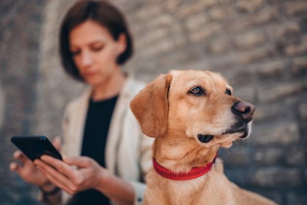 通りに彼の所有者のそばに座って赤い襟を着て犬