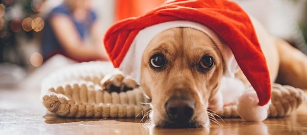 枕の上に敷設サンタ帽子をかぶっている犬