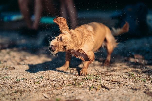 水をふっ飛ばす犬