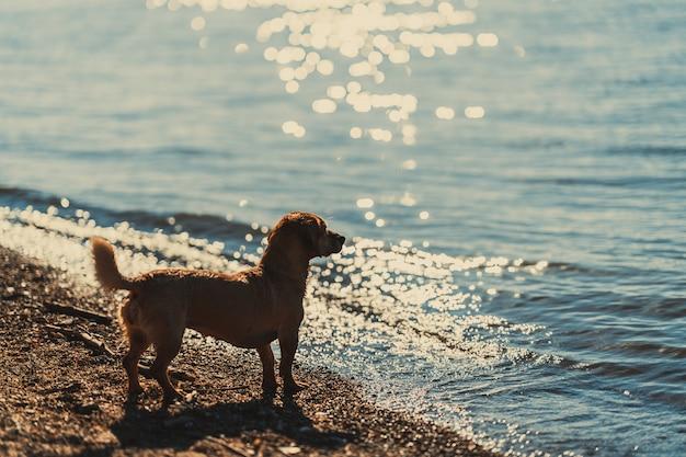 川のそばに立っている犬