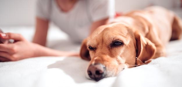 ベッドに横たわっている犬