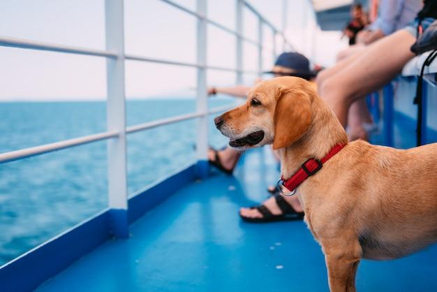 フェリーで旅行する犬