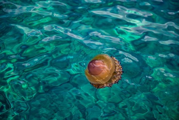 ギリシャ海のクラゲ