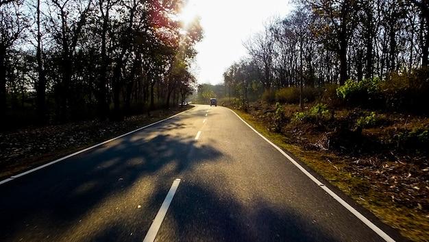 早朝の森林旅行