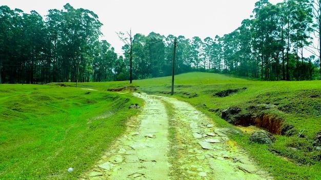 美しい森林サファリ