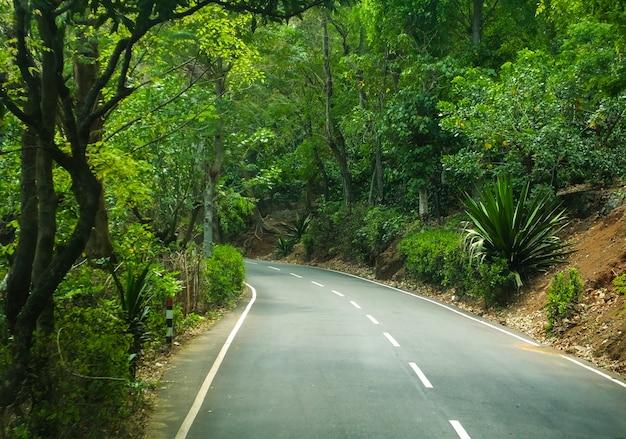 美しい森林旅行