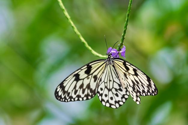 Бумажный змей бабочка