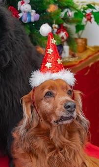 小さな茶色の犬、クリスマス帽子でポーズ