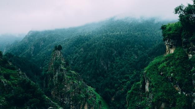 緑の牧草地山曇り