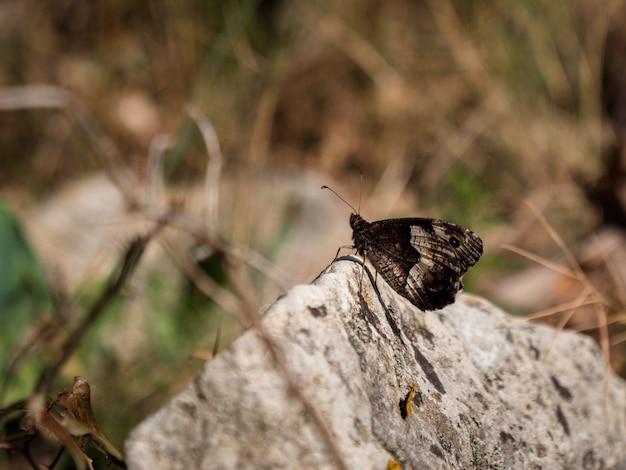 Красивая бабочка на скале в сельской местности