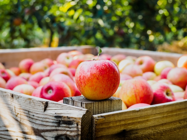 Красное яблоко на деревянном поддоне в поле яблонь