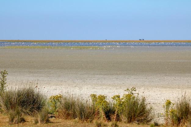 国立公園の沼地。