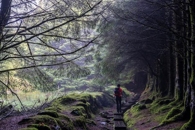 ウィックローの道で葉のない木と霧のある暗い道。