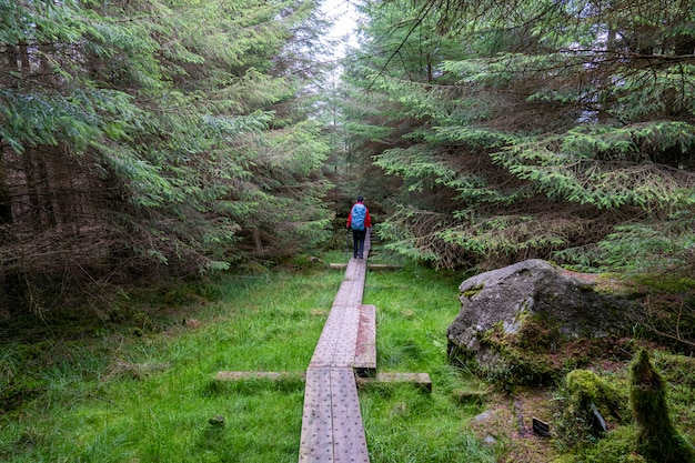 Деревянная дорожка в пути уиклоу с девушкой-экскурсисткой.