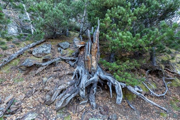 幹、倒木の根