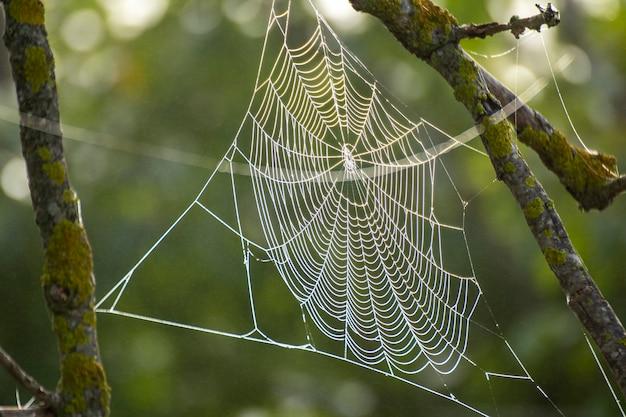 山岳植物間のクモの巣