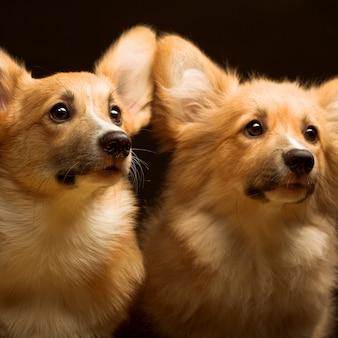 Два щенка. закрыть
