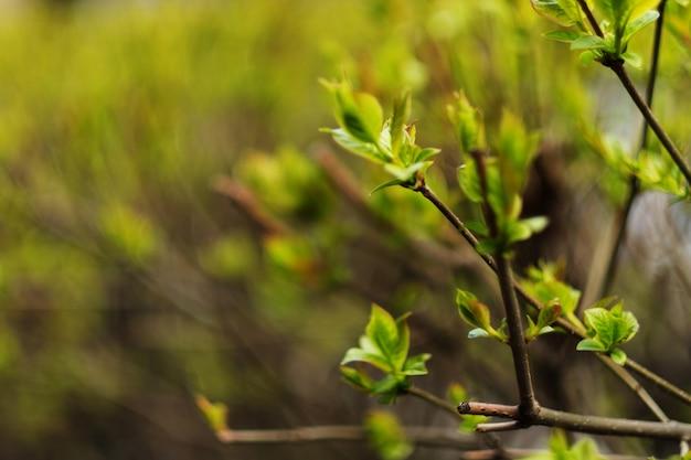 Свежие и зеленые листья