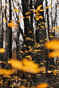 Ярко-желтые листья в перспективе