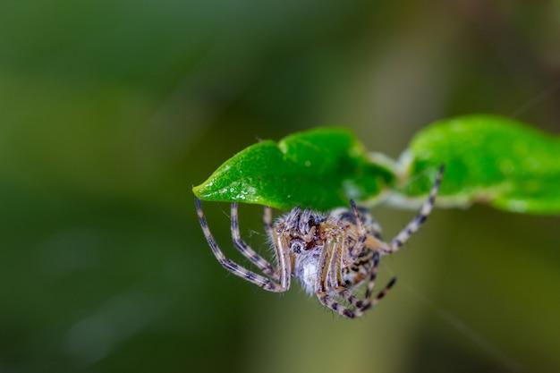 その自然環境でハエトリグモ。